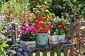 Gartenzaun herbstlich dekoriert mit Alpenveilchen, Lampionpflanze und Snack-Paprika