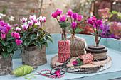 Kleine Sträußchen aus Alpenveilchen, ungewöhnlich dekoriert mit Garnrollen und Schnur, Töpfe verkleidet mit Rinde