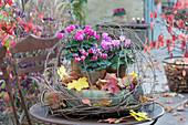 Topf-Arrangement mit Alpenveilchen in Blech-Töpfen, in großer Schale dekoriert mit Herbstlaub und Ranken vom wilden Wein