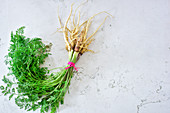 A bunch of wild carrots on a light stone background