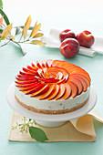 Amaretti-Nektarinen-Cheesecake