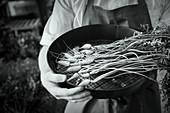 Frisch geerntete Karotten im Sieb