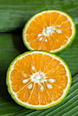 Japanese green oranges