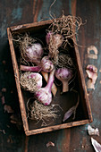 Bulbs of garlic in a wooden box