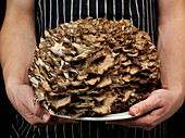 Hen of the woods', Mushroom (Grifola frondosa)