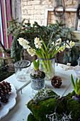 Hyazinthen als erste Frühlingsblüten im Winter