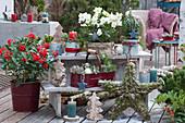 Weihnachtsdekoration auf der Terrasse: Christrose, Stern aus Moos, Zweigen und Zapfen, Kerzen, Zuckerhutfichte, Tannenbäumchen aus Rinde und Koniferenzweige
