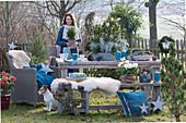 Frau dekoriert weihnachtliche Sitzgruppe im Garten: Schale mit Kiefer, Zwergfichte und Currykraut, Sterne, Zapfen, Kerzen, Bank mit Fell und Korbsessel als Sitzplatz, Hund Zula