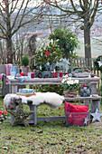 Schale mit Kiefer, Zwergfichte und Currykraut weihnachtlich geschmückt mit Sternen auf dem Gartentisch