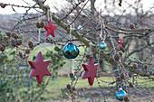 Lärche weihnachtlich geschmückt mit roten Holzsternen und türkisen Kugeln