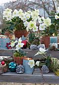 Weihnachtliches Arrangement mit Christrosen, Kerzen, Kugeln, Zapfen und Sternen