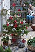 Nordmanntanne mit Holzsternen, Lichterkette und Zapfen als Weihnachtsbaum geschmückt, Frau mit Hund Zula