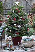 Nordmanntanne mit Lichterkette, Sternen und Kugeln als Weihnachtsbaum, Schlitten mit Fell und Schale mit Herzen, Zapfen und Kugeln als Deko