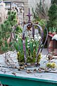Schneeglöckchen mit Moos in Krone, Lärchenzweige mit Zapfen