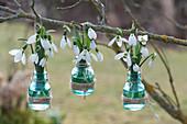Schneeglöckchen in kleinen Flaschen an Zweig gehängt