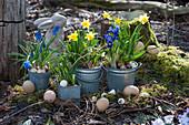 Zinktöpfe mit Narzissen 'Tete a Tete', Traubenhyazinthen 'Blue Pearl', Netziris und Milchstern als Osterdeko im Garten mit Osterhase und Ostereiern auf Moos