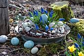 Osternest mit Traubenhyazinthen 'Blue Pearl', Kranz aus Kätzchenweide und Ostereiern in Zinkschale
