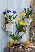Emaillierte Gefäße als Wandhänger mit Narzisse 'Tete a Tete', Traubenhyazinthen 'Blue Pearl', Netziris und Milchstern