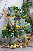 Oster-Arrangement auf der Terrasse: Narzissen 'Tete a Tete', Netziris, Milchstern, Traubenhyazinthen, Krokus, Osterhasen und Ostereier