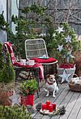 Weihnachtliche Terrasse mit Kiefer und Zuckerhutfichte, geschmückt mit Sternen und Lichterkette