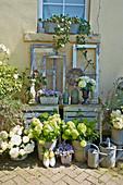 Vintage-Deko mit alten Fenstern und Hortensien vor dem Haus