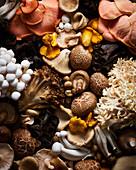 Wild Mushroom variety