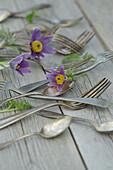 Silver cutlery and pasque flower (Pulsatilla vulgaris)