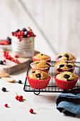 Beeren-Muffins auf Abkühlgitter