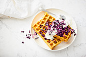 Pumpkin waffles with chive quark and radish cress