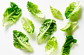 Pattern with romaine leaves arranged on white background
