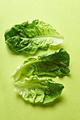 Romaine leaves arranged on green background