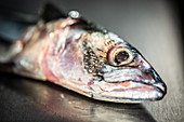 A fish head (close-up)