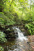 A waterfall on the Dollbergschleife hiking route, Saarland, Germany
