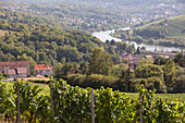 A vineyard hiking route with a view of France and Luxembourg (tri-border area)