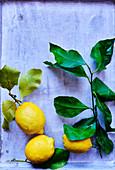 Lemon life style