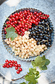 Red, black and white currants on an outdoor table
