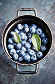 Freshly picked blueberries in a pot