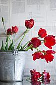 Verwelkter Tulpenstrauss in einem Zinkeimer