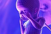 Foetus, week 23, illustration