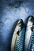 Two mackerel on zinc surface
