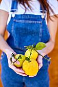 Hände halten grosse Zitronen