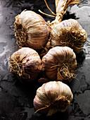 Garlic bunch