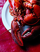 Lobster on red background