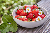 Fresh strawberries with daisies in a bowl