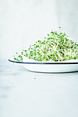 Alfalfa sprouts in an enamel bowl