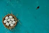 Eier im Körbchen und Feder auf blauem Untergrund