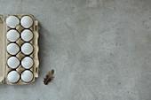 Eier im Eierbehälter und Feder auf grauem Untergrund