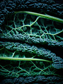 A close up shot of a cabbage leaf