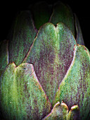 A close up photograph of an artichoke