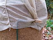 Winterschutz für Küchenlorbeer im Garten
